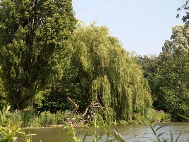 Flevopark, centrale vijver
